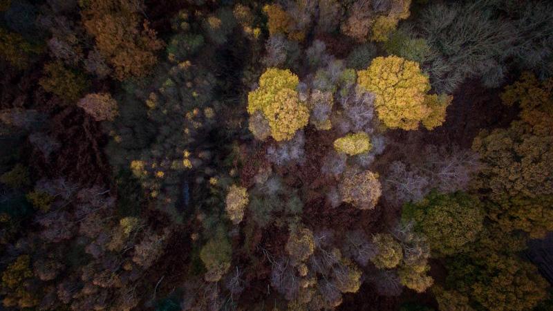 Cómo mejorar tus fotos aéreas bosque